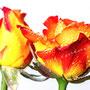 Rose 220