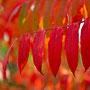 Herbstblatt Nr.0054
