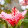 Blüten-Allgemein Nr.0582