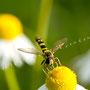 Insekten Nr.0422