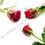 Vereiste-Rose Nr.0032