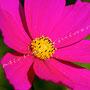 Blüten-Allgemein Nr.0482