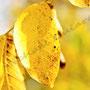 Herbstblatt Nr.0055