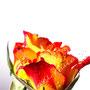 Rose 226