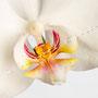 Orchidee Nr.0608