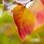 Herbstblatt Nr.0058