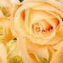 Rosenblüten-Blätter Nr.0385