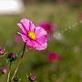 Blüten-Allgemein Nr.0487