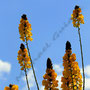 Blume Nr.0169