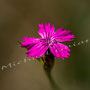Blüten-Allgemein Nr.0446