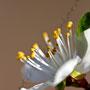 Blume Nr.0168