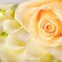 Rosenblüten-Blätter Nr.0384