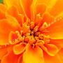 Blüten-Allgemein Nr.0564
