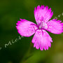 Blüten-Allgemein Nr.0566