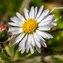 Blüten-Allgemein Nr.0573