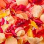 Rosenblüten-Blätter Nr.0549