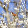 Schmetterling Nr.0404