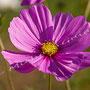 Blüten-Allgemein Nr.0486