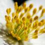 Blüten-Allgemein Nr.0565