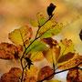 Herbstblatt Nr.0082