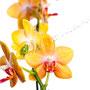 Orchidee Nr.0655