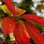 Herbstblatt Nr.0056