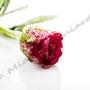 Vereiste-Rose Nr.0031