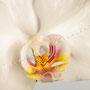 Orchidee Nr.0602