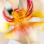 Orchidee Nr.0611