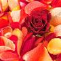 Rosenblüten-Blätter Nr.0083