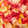 Rosenblüten-Blätter Nr.0545