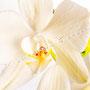 Orchidee Nr.0628