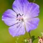 Blüten-Allgemein Nr.0470