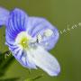 Blüten-Allgemein Nr.0569