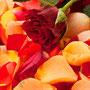 Rosenblüten-Blätter Nr.0084
