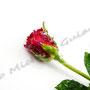 Vereiste-Rose Nr.0029