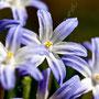 Blume Nr.0186