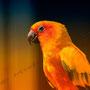 Papagei Nr.0181