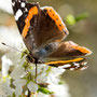 Schmetterling Nr.0400