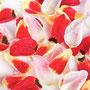 Tulpe Nr.0046