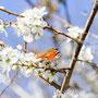 Schmetterling Nr.0403