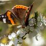 Schmetterling Nr.0399