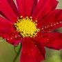 Blüten-Allgemein Nr.0483