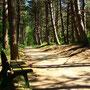 St.Peter-Ording Wanderweg durch Kiefernwald