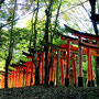 a few Torii out of 10,000