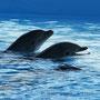 Delfines de Selwo Marina Benalmadena, Malaga