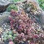 Bordesholmer Landfrauen; Blumenzwiebeln pflanzen in Brügge im September 2017