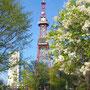 大通公園テレビ塔とライラック