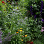 Das Staudenbeet in voller Blüte