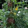 Der Weidenrankobelisk ist schon komplett zugerankt von Zuckerschoten, Kapuzinerkresse und Duftwicken